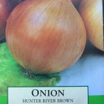 Onion – How To & Journal